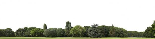 Zeer hoge definitie treeline geïsoleerd op wit
