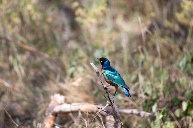 Zeer kleurrijke vogel zit op een brach