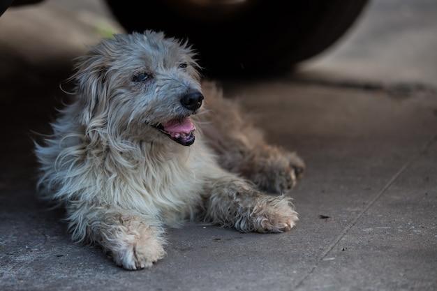 Zeer oude hond die in de schaduw rust