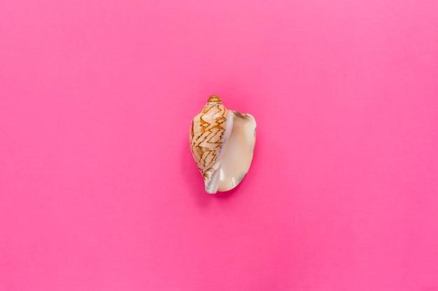 Zeeschelp als symbool van vrouwen die op pastelroze achtergrond worden verzorgd. symbool van vrouwelijke geslachtsdelen genitaliën vulva vagina. plat lag, bovenaanzicht, kopieer ruimte.