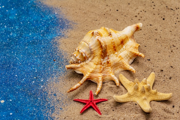 Zeeschelp en zeesterren