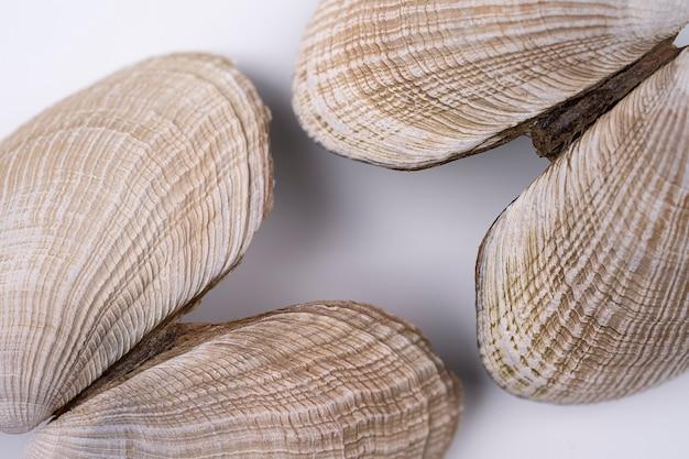 Zeeschelp, lege schil van klein schepsel met hard. schelpen macro shoot voor achtergrond of wallpaper