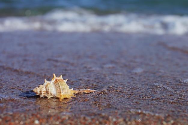 Zeeschelp op de oceaan op het zand in een vloedgolf
