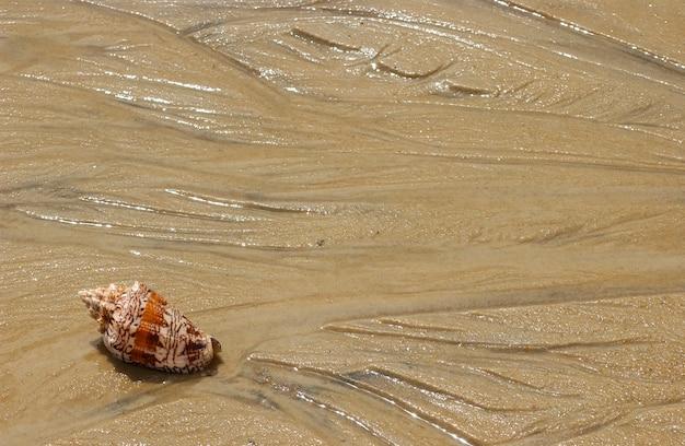Zeeschelp op het strandzand als achtergrond.