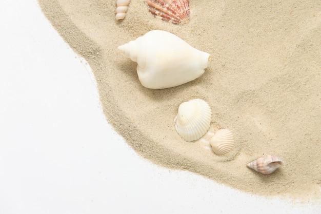 Zeeschelp op het zand. vakantie concept