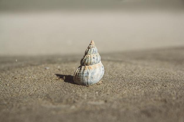 Zeeschelp op zandstrand. zomer achtergrond. ruimte kopiëren. kan gebruiken als banner