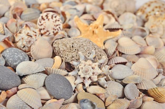 Zeeschelpen en kiezelstenen close-up als achtergrondstructuur