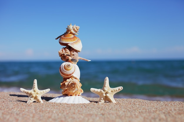 Zeeschelpen en zeesterren op het strand