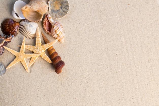 Zeeschelpen en zeesterren op het zand