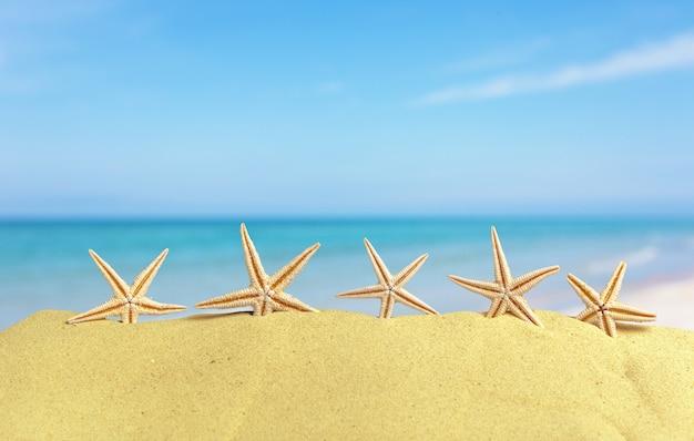 Zeeschelpen met zand als achtergrond. zomerstrand
