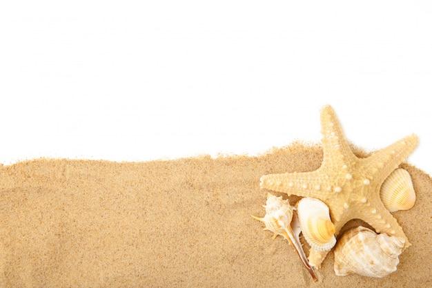 Zeeschelpen met zand dat op wit met exemplaarruimte wordt geïsoleerd. zomer concept