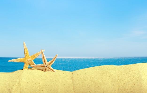 Zeeschelpen met zand