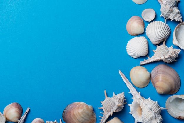 Zeeschelpen op de blauwe achtergrond. zomer concept, top-down weergave met kopie ruimte voor tekst
