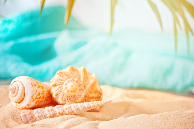 Zeeschelpen op een wit zand op het palmblad.