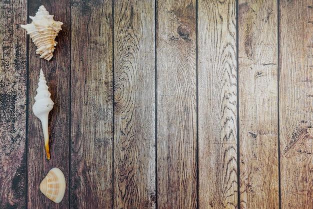 Zeeschelpen op hout