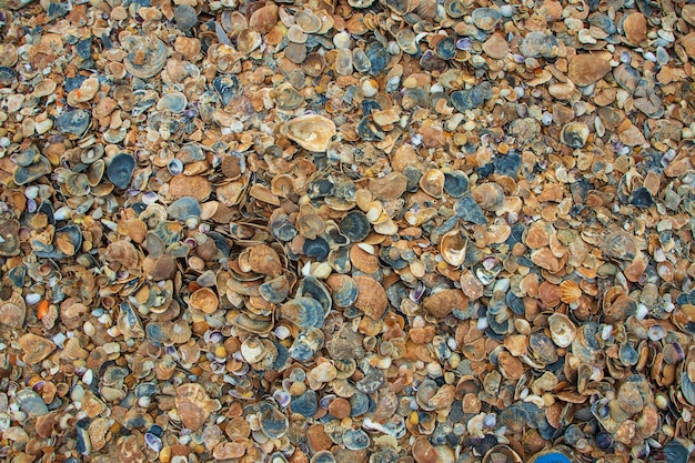 Zeeschelpen op zand. zomer strand achtergrond. bovenaanzicht