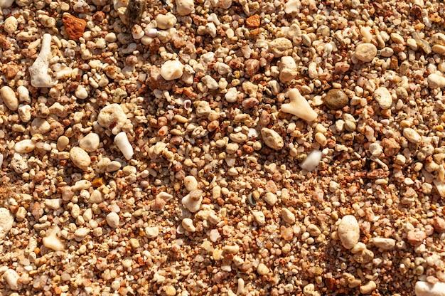 Zeeschelpen op zand. zomer strand achtergrond. bovenaanzicht.