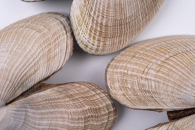 Zeeschelpen verspreid over het witte oppervlak bovenaanzicht macroweergave met textuur textuur van zeeleven