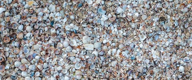 Zeeschelpenachtergrond, vele kleine mooie schelpen. bovenaanzicht, plat gelegd. banier.