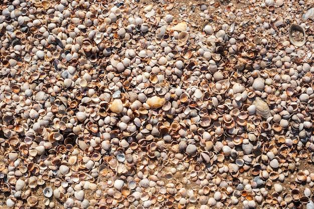 Zeeschelpenachtergrond, vele kleine mooie schelpen. bovenaanzicht, plat gelegd.