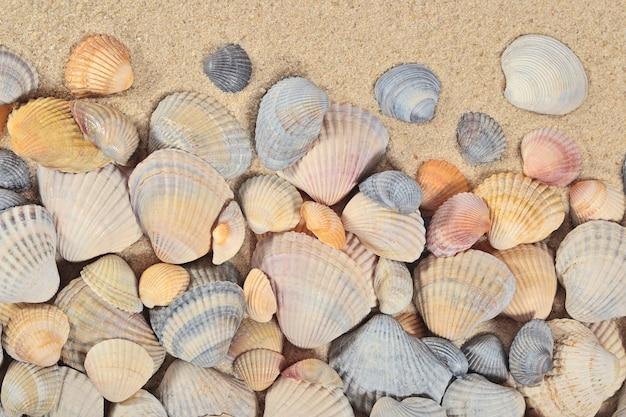 Zeeschelpenclose-up op een zandachtergrond