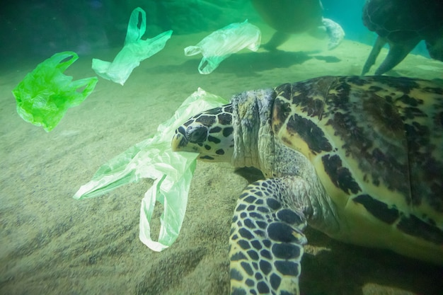 Zeeschildpad eet plastic zak oceaan vervuiling concept