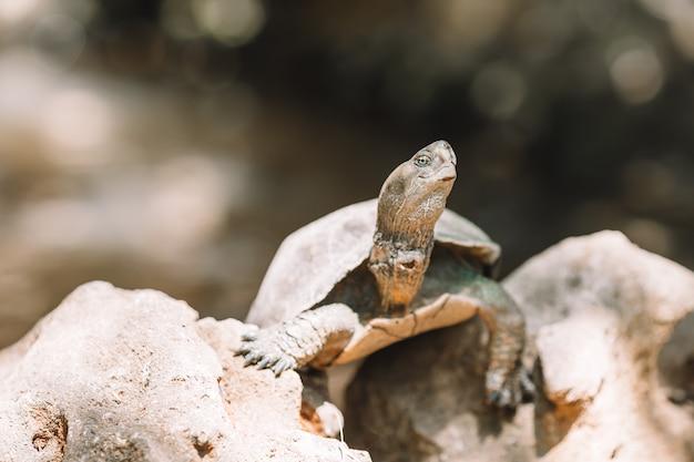Zeeschildpadden die van het water in de reserve kijken
