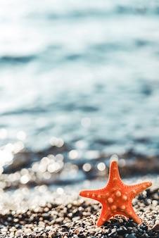 Zeester aan de zeekust