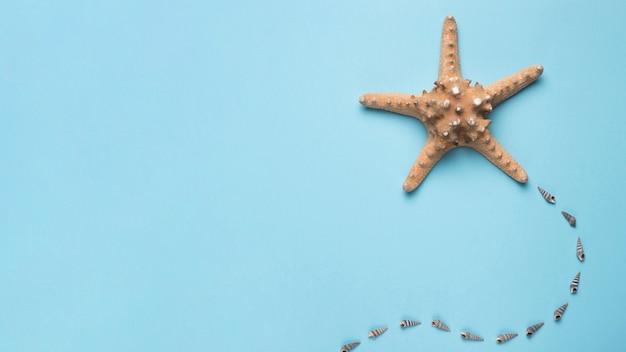Zeester en overzeese shells op blauwe achtergrond