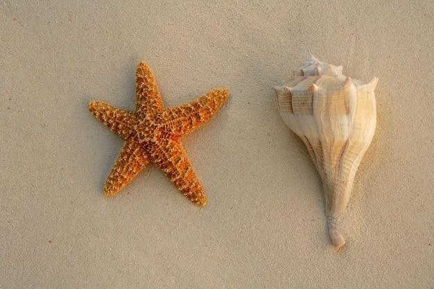 Zeester en schelp in zand