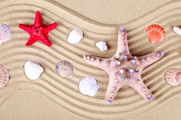 Zeester en schelpen op het strand.