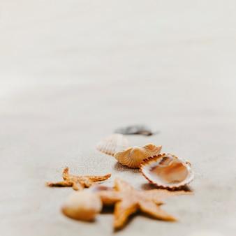 Zeester en schelpen op het zand