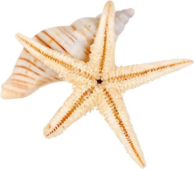 Zeester en shell geïsoleerd op witte achtergrond
