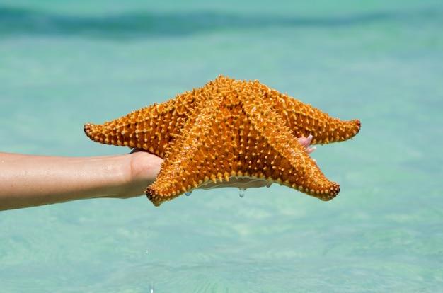 Zeester in de hand in zee