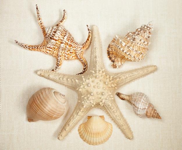 Zeester in het midden van het frame met schelpen op een lichtbeige achtergrond, bovenaanzicht.