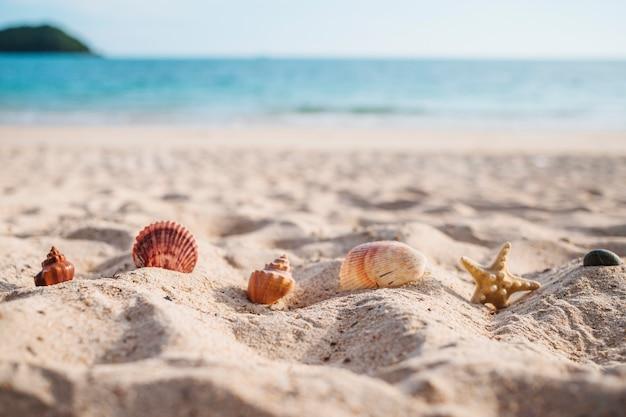 Zeester met overzeese shells in zand