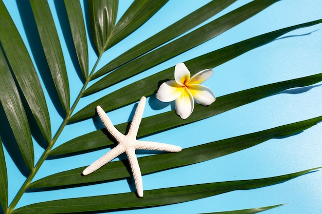 Zeester met plumeria of frangipanibloem op tropische palmbladen op blauw