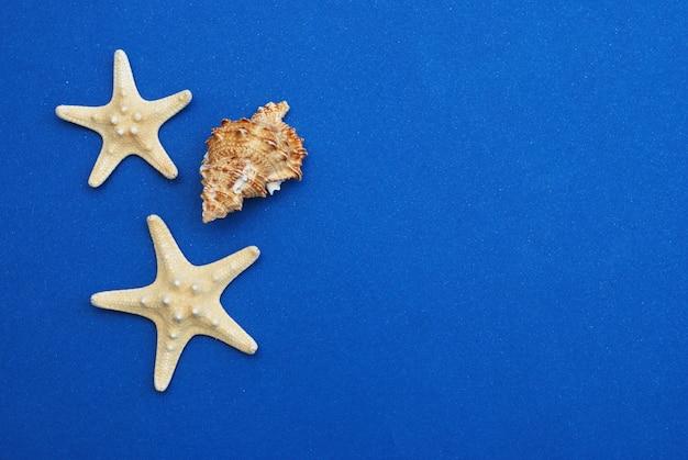 Zeester met shell op blauwe achtergrond, exemplaarruimte. zomervakantie.