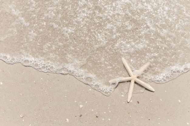 Zeester op de strandachtergrond