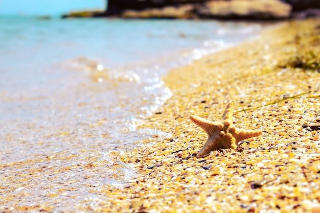 Zeester op een zandstrand