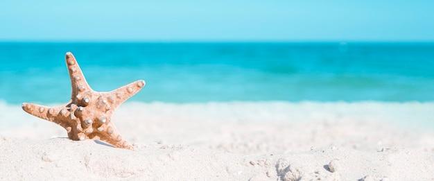 Zeester op een zomerse zee achtergrond met kopie ruimte. zee kust. banier.