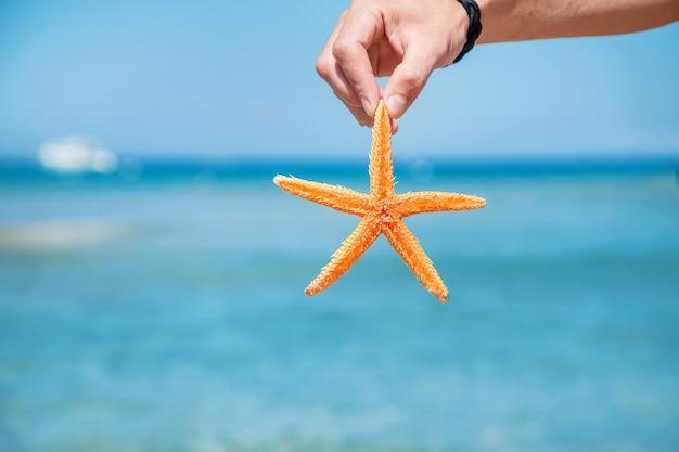 Zeester op het strand in de handen van een man. selectieve aandacht. natuur.
