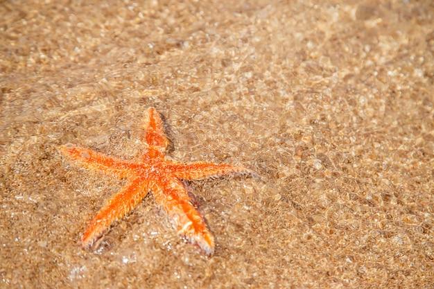 Zeester op het strand op het zand. selectieve aandacht. natuur.