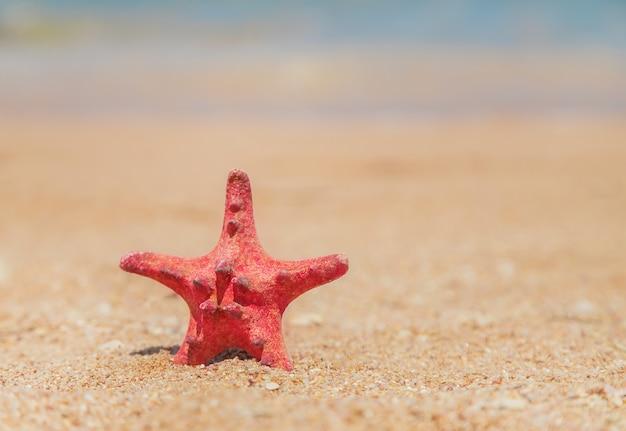 Zeester op het strand op het zand. selectieve aandacht.