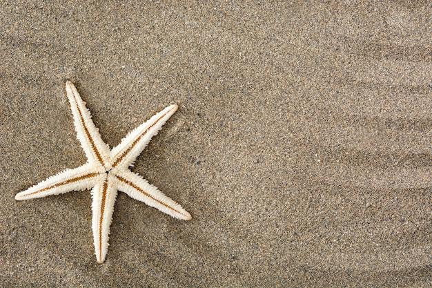 Zeester op zand kopie ruimte