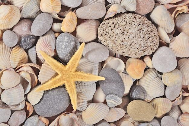 Zeester, schelpen en kiezelstenen close-up