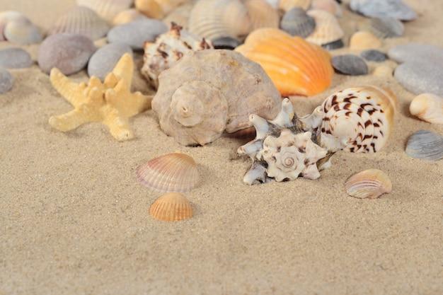Zeesterren en schelpen close-up op een zand achtergrond