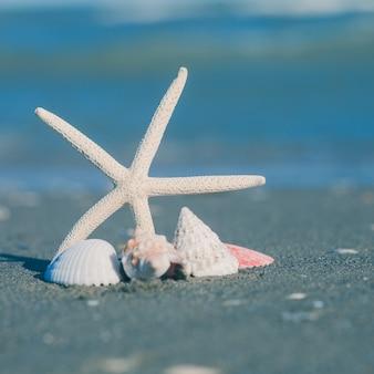 Zeesterren en schelpen op het zandstrand