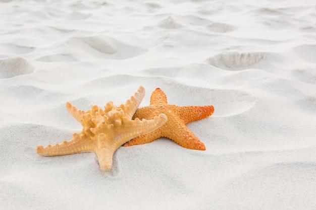 Zeesterren op zand