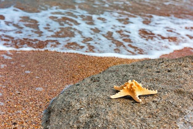 Zeesterren op zomerthema aan zee Premium Foto
